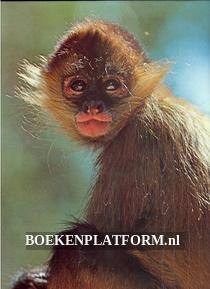 Affen in Farbe