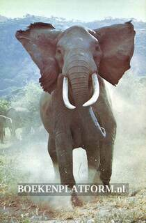 Bij de Olifanten