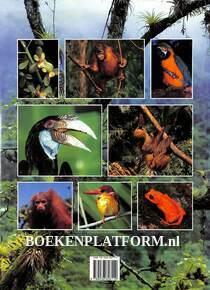 De Tropische Regenwouden
