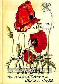 Die schönsten Blumen in Wiese und Feld