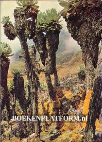 Afrika Wüste Steppe Urwald