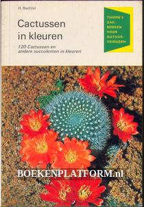 Cactussen in kleuren